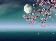 Sakura under the Moon Royalty Free Stock Images