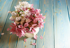 Sakura in vase. Red delicate Japanese flowers in a small vase standing on the table. Table of blue planed boards. Painted surface of the table. The blue color stock images