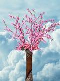 Sakura in vase with sky background. Sakura in vase with clear sky background with clouds Royalty Free Stock Image