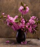 Sakura in a vase Stock Image