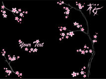 Sakura vector Royalty Free Stock Photography