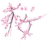 Sakura vector Royalty Free Stock Photo