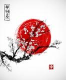 Sakura w okwitnięciu i czerwieni słońcu, symbol Japonia na białym tle Zawiera hieroglify - zen, wolność, natura Obraz Royalty Free