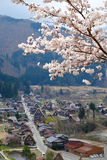 Sakura w Shirakawago wiosce Obrazy Royalty Free