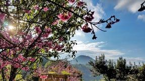 Sakura widok Obraz Stock