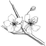 Sakura wildflower σε ένα διανυσματικό ύφος που απομονώνεται Στοκ Εικόνες