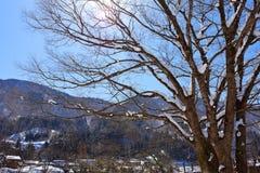 Sakura in Winter Royalty Free Stock Images