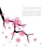 Sakura wiosny Kwitnące gałąź Zdjęcia Royalty Free