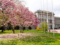 Sakura in Zagreb Croatia Royalty Free Stock Photography