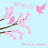 Sakura-Zweig Lizenzfreie Stockbilder