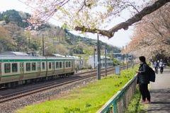Sakura zwiedzający pociąg Zdjęcia Royalty Free