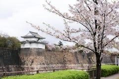 Sakurabloesem met het kasteelvesting van Osaka op achtergrond stock afbeeldingen