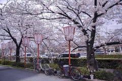 Sakuraseizoen in Kyoto Stock Foto