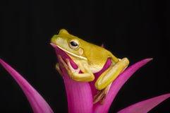 Salón de la selva tropical Fotografía de archivo