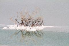 Sal del mar muerto Fotos de archivo
