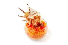 Sal do mar com escudos Imagens de Stock Royalty Free
