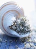 Sal do mar de Fleur de sel em um escudo Imagens de Stock