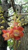 Sal Flowers Stock Image
