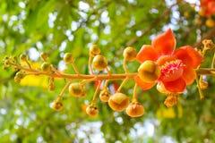 Sal kwiaty Obrazy Royalty Free