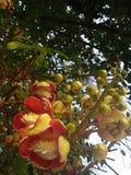 Sal kwiaty obrazy stock