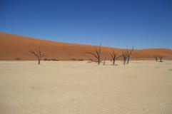 Sal Pan Desert Landscape com árvores inoperantes, Namíbia de Sossusvlei Fotografia de Stock Royalty Free