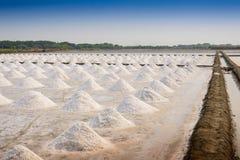 Sal que cultiva en Tailandia foto de archivo libre de regalías