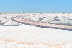 Sal que recolhe na exploração agrícola de sal, India Fotografia de Stock Royalty Free