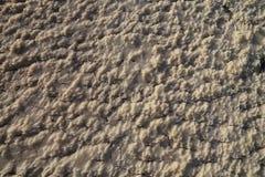 Sal seco Fotografia de Stock