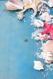 Sal y cáscaras del mar del OS de la frontera Fotografía de archivo libre de regalías