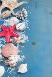 Sal y cáscaras del mar del OS de la frontera Fotos de archivo libres de regalías
