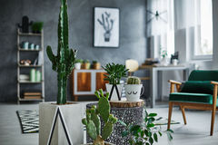 Sala com decorações dos cactos Imagens de Stock