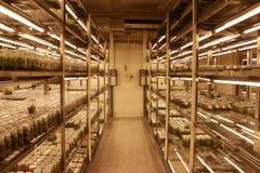Sala da cultura de tecido de planta Fotografia de Stock