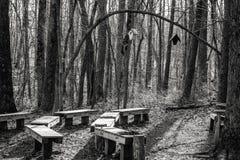 Sala de aula da floresta na tarde Fotografia de Stock