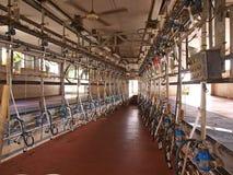 Sala de estar de ordenha moderna da indústria do leite Imagens de Stock