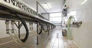 sala di mungitura per le capre e le pecore degli animali da allevamento Immagine Stock Libera da Diritti