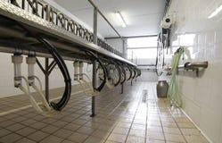 sala di mungitura per le capre e le pecore degli animali da allevamento Immagini Stock