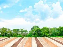 Sala vazia da perspectiva com a lagoa na floresta e céu azul e wo fotos de stock