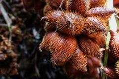 Salacca grono Zdjęcie Stock
