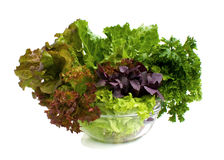 Salad. Stock Image