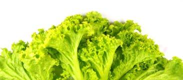 Salad. Macro photo salad leaf isolated on white Stock Image