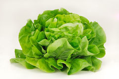 Salad. A beautiful lettuce salad on a white background Stock Images