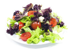 Free Salad Royalty Free Stock Photo - 14061125