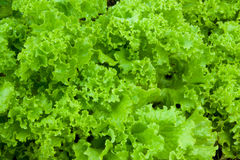 Salad. The beautiful fresh green salad royalty free stock photos