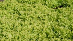 Salad. An image of  green Salad Stock Photos