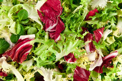 Salad. Mixed salad leaves as background Stock Photography