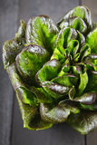 Salad. Colorful Salad Head on Rustic Garden Table Royalty Free Stock Photography