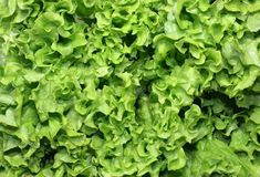 Salad. Green, fresh salad. A close up Royalty Free Stock Photography