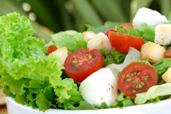 Salad. Delicious diet salad close up Stock Images
