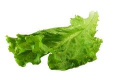 Salad. Fresh salad on white background royalty free stock images