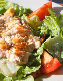 Salad. With chicken meat, tomato, olive and lettuce Stock Photography